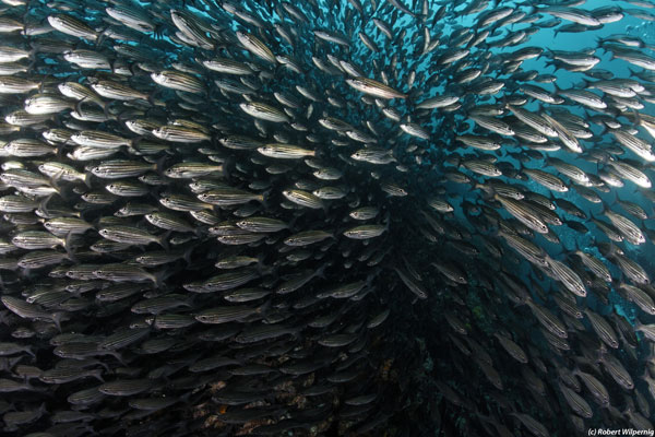 fish_school_galapagos