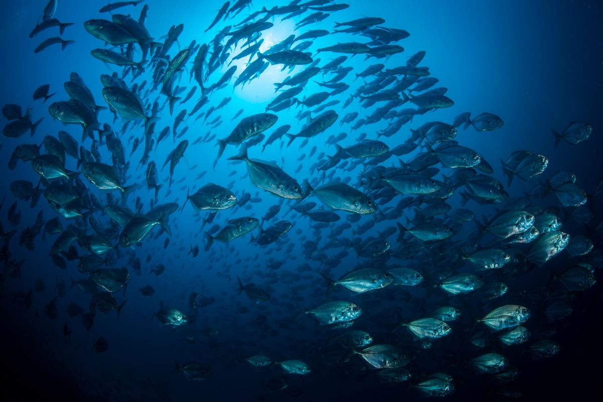 Large school of fishes in the Galapagos