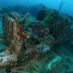 The Top Six Best Dive Sites Of Solomon Islands