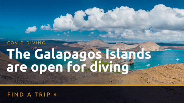 Diving Galapagos during COVID-19