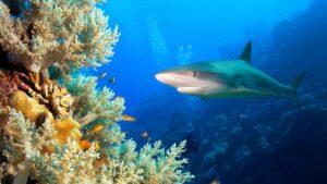 Saving our Sharks