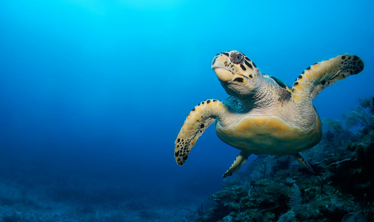 Sea turtles - six facts you probably didn't know