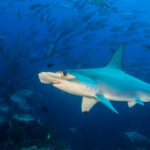 Where do hammerheads go when we're not watching?