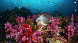 Is This Thailand's Best Dive Site?