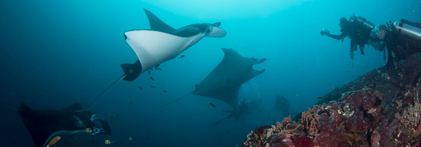 Photographers waiting on manta rays