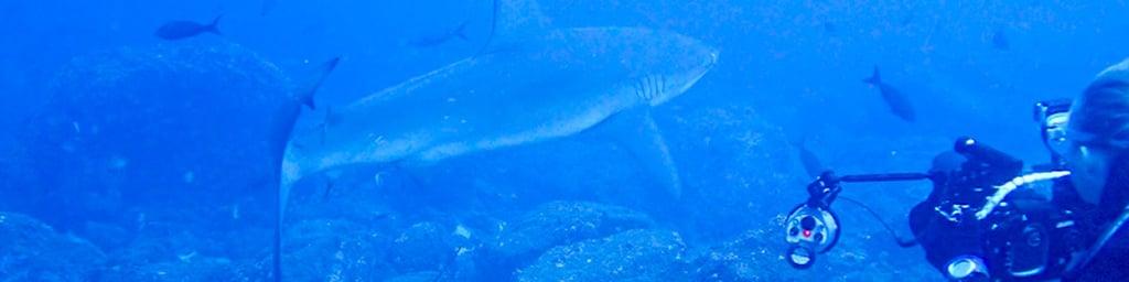 Pennys Galapagos Blog